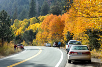 Leaf Peepers on Luther Pass Road