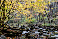 Fall Colors, Great Smoky Mountains (2)